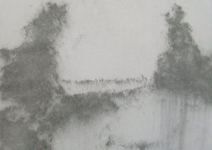 Dva stromy, 2009, uhel na papíře, 29,7x42cm