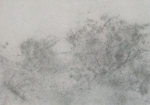 Dvě křoví, 2009, uhel na papíře, 29,7x42cm